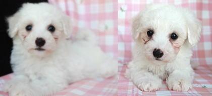 子犬ID:20190512004画像