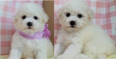 子犬ID:20201003001画像